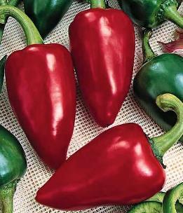 Перец Бизон красный: описание сорта, уход, выращивание, фото