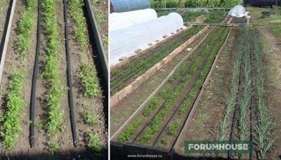 Гранулированная морковь: как сажать + видео