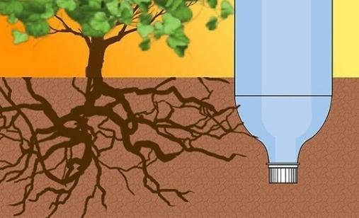 Томат Райское Наслаждение: характеристика и описание сорта