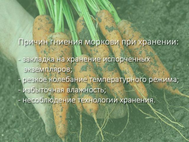 Как правильно хранить морковь и свеклу