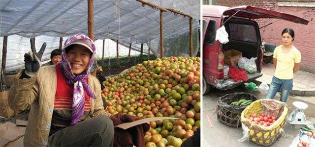 Рассада томатов выращенная по китайскому способу