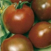 Сорта томатов для теплицы, устойчивые к фитофторе