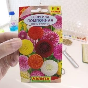 Георгина Помпонная + фото