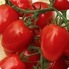 Лучшие сорта томатов черри + фото