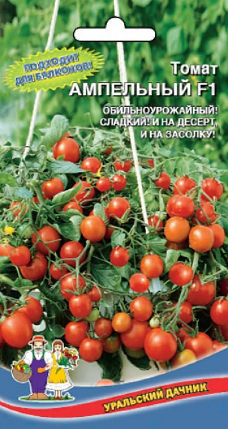 Способ выращивания ампельных помидоров