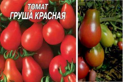 Томат Груша красная, черная, медовая, розовая, оранжевая: описание сортов, отзывы