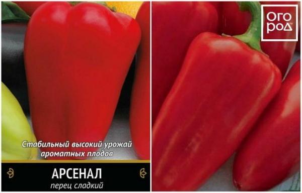Перец Гордость России: описание сорта, урожайность, уход, фото