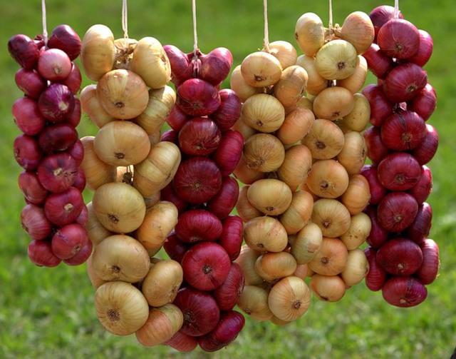 Как хранить лук-севок в домашних условиях