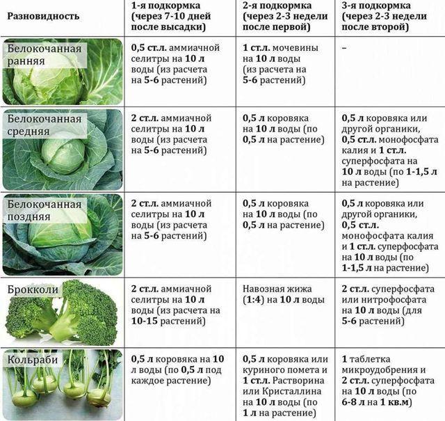 Чем удобрять рассаду капусты
