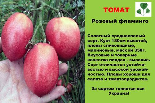 Томат Розовый фламинго: характеристика и описание сорта.