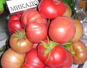 Томат Микадо розовый: характеристика и описание сорта