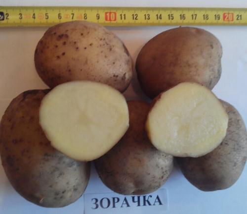 Картофель Зорачка: описание сорта, фото, отзывы