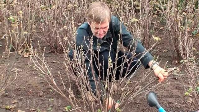 Чем и когда опрыскивать плодовые деревья: препараты