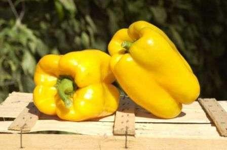 Крупноплодный толстостенный перец