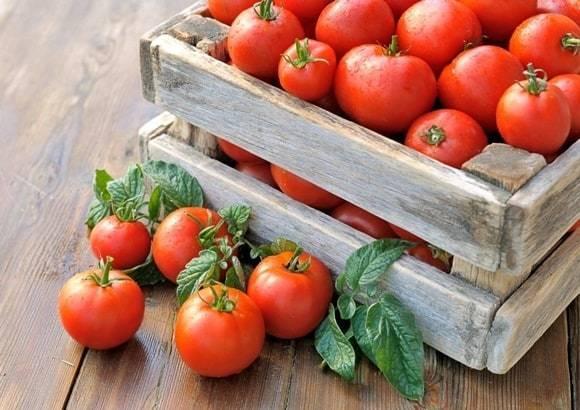 Томат Третьяковский f1: отзывы, фото, урожайность