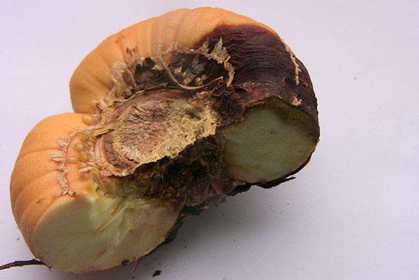 Лечение болезней гладиолусов