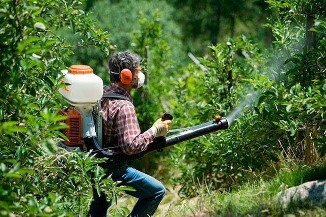 Опрыскивание плодовых деревьев мочевиной