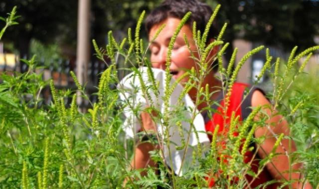 Карантинные сорняки