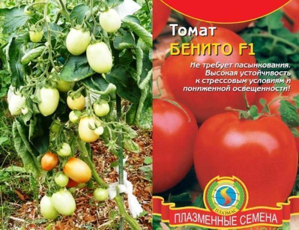Томат Бенито: характеристика и описание сорта