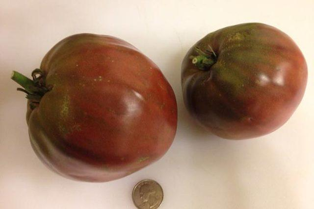 Характеристика и описание сорта томата бычье сердце