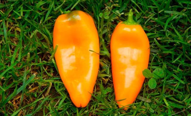 Сладкий перец Апельсин