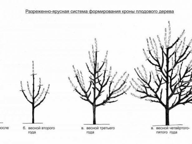 Груша Кюре: описание, фото, отзывы, как хранить, плюсы и минусы
