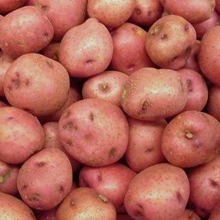 Картофель Взрывной: описание сорта, фото, отзывы, агротехника
