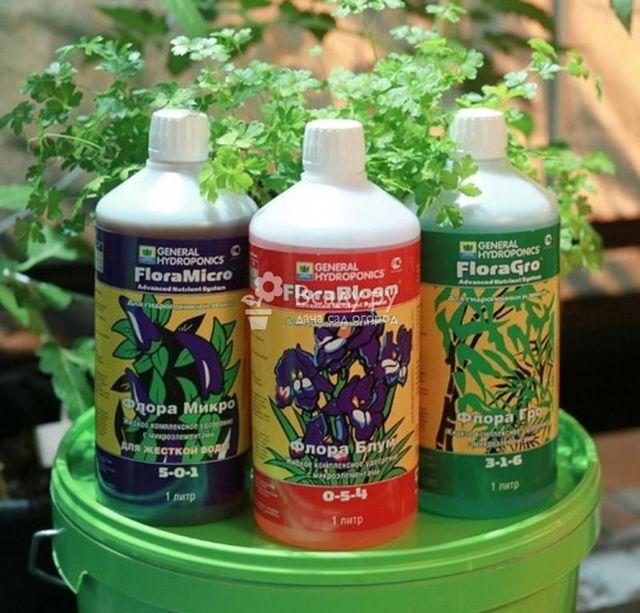 Выращивание клубники гидропонным методом