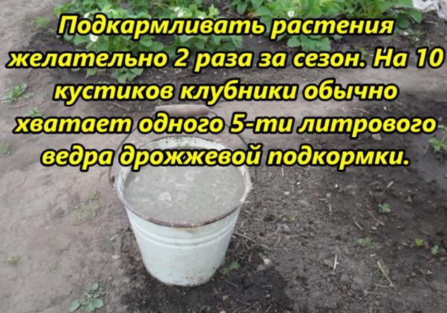 Как подкормить ремонтантную клубнику