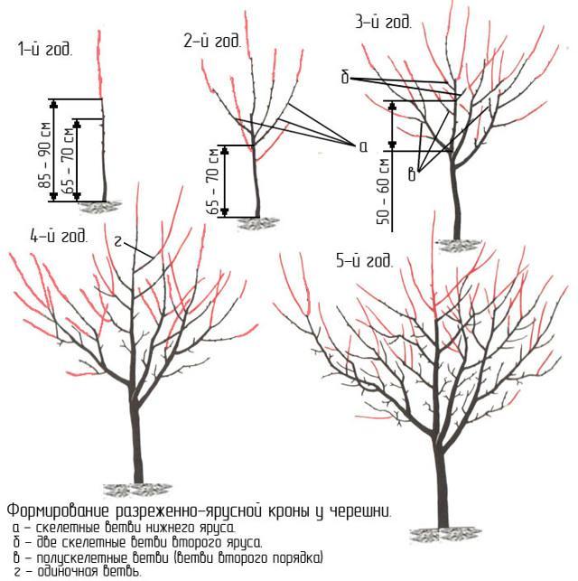 Черешня Валерий Чкалов: описание сорта, опылители, фото, отзывы