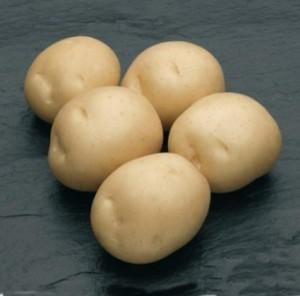 Картофель Сифра: описание сорта, фото, отзывы