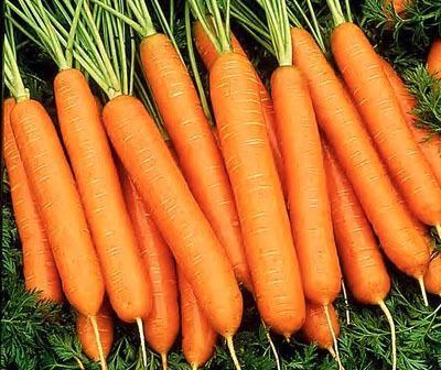 Когда посеять морковь в Подмосковье