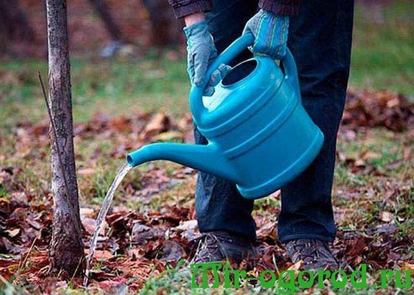 Удобрение для груши осенью: чем подкормить для хорошего урожая, как вносить