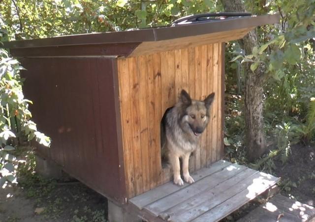 Будка собаке из подручного материала