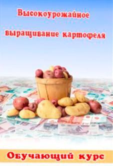 Яровизация картофеля перед посадкой + видео