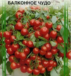 Выращиваем на балконе помидоры
