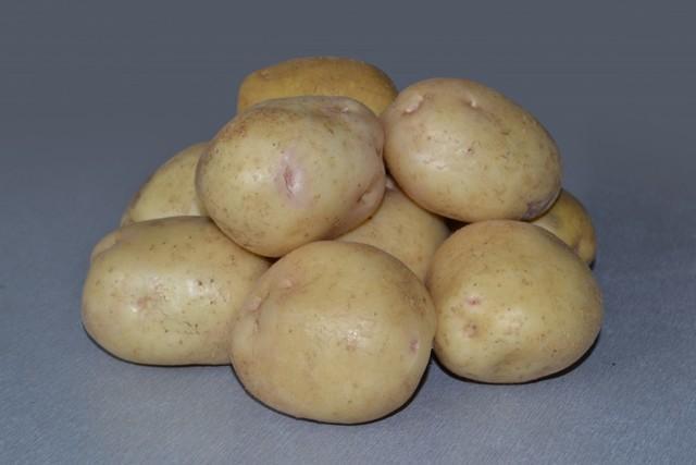 Картофель Невский: описание сорта, фото, отзывы, урожайность