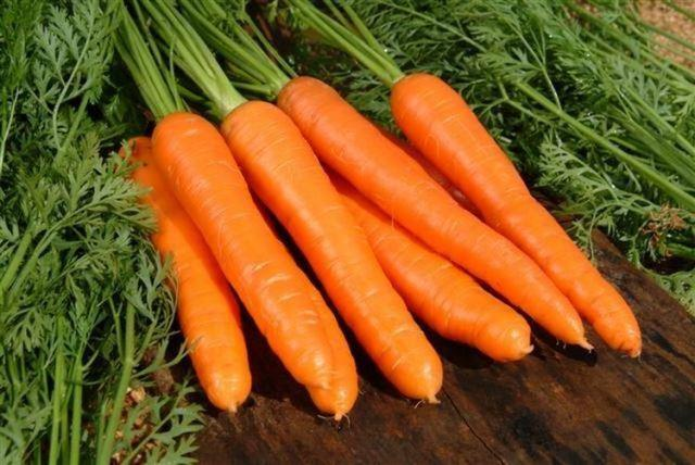 Сажаем морковь в апреле по лунному календарю