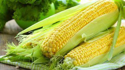 Как хранить кукурузу на зиму: в початках, зерне, сушка, срок хранения