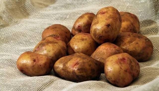 Мыть ли картофель перед хранением: правила хранения картошки