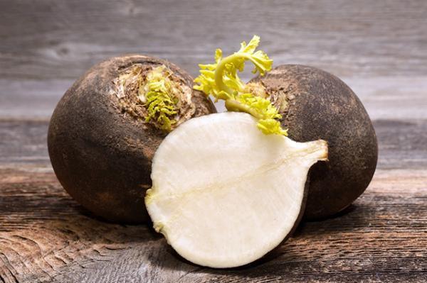 Овощные культуры: горькая редька, посевная, лобо, желтая, черная