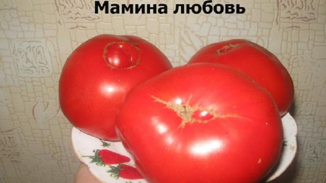 Томат Мамина любовь: описание сорта, отзывы, фото