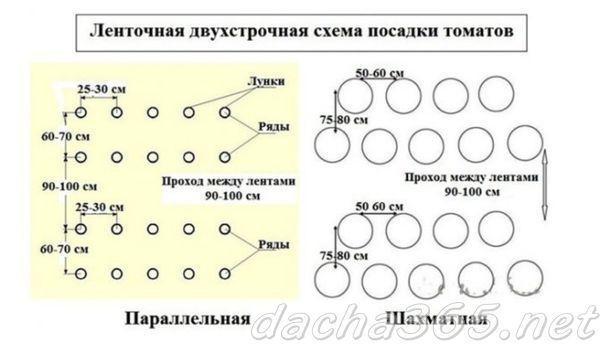 Когда высаживают томаты в теплицу на Урале