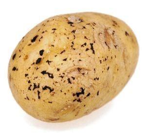 Болезни клубней картофеля