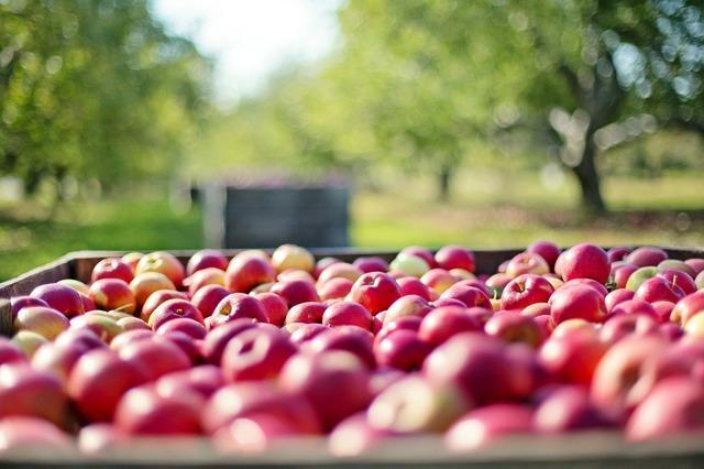 Яблоки на зиму в погреб