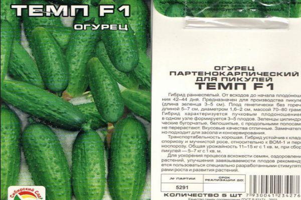 Огурцы Темп: отзывы, фото, описание сорта, выращивание, урожайность