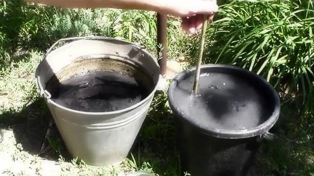 Как правильно подкормить баклажаны в теплице