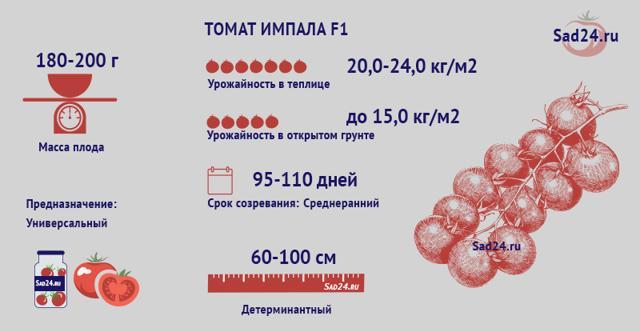 Томат Импала: описание сорта и характеристики, отзывы, фото