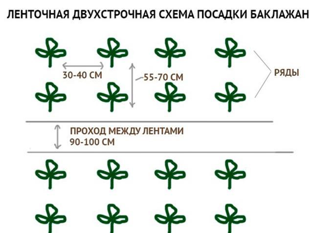 Баклажан Марципан f1: отзывы, фото, описание