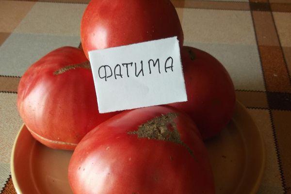 Томат Фатима: характеристика и описание сорта